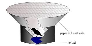 ornithology wikipedia