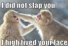 Baby Monkey Meme - 10 funny monkey memes for your face