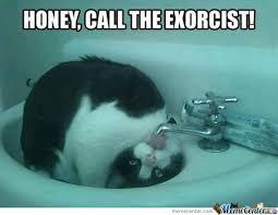 Go Home Meme - go home cat your drunk by meme dolan meme center