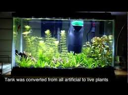 10 gallon planted tank led lighting 10 gallon planted aquarium community youtube