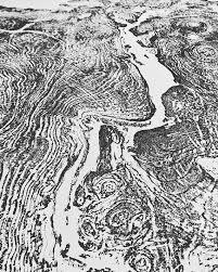 ls that look like trees giant tree ring art big leaf maple tree ring print