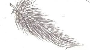 how to draw a feather drawing pencil