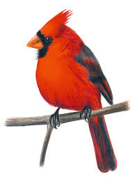 cardinal clipart free download clip art free clip art on