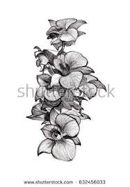 flower sketch orchids bouquet hand drawing stock illustration