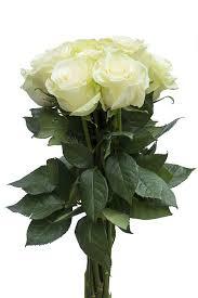 White Roses For Sale White Roses For Sale Buy Cheap White Roses Flower Explosion