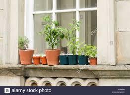window herb gardens window herb garden with cat looking through window uk stock