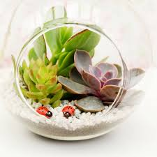 large glass hanging bauble succulent terrarium by dingading