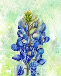 print texas bluebonnet watercolor and colored pencil art by