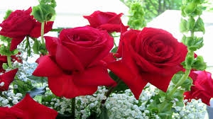 Flowers Near Me - red roses 654 wallpapers13 com