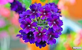 purple and blue flowers purple flowers 25 pretty small purple flower plants