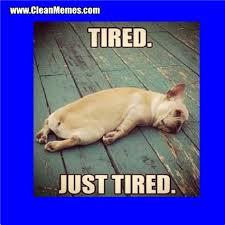 Tired Dog Meme - th id oip wxfzubwm08cpmccph1n qqhaha