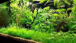 tips and advice on growing plants in aquariums what you need to