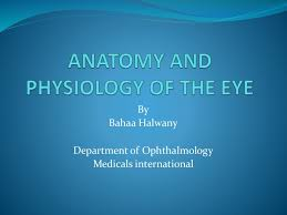 Eye Anatomy And Physiology Anatomy And Physiology Of The Eye