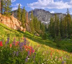 wildflowers in albion basin utah lupines paintbrush and m u2026 flickr