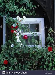 window window box climbing roses house residential house