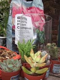 diy succulent terrariums hometalk