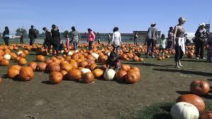 Videos On Thanksgiving Toronto Oct 11 Pumpkinfest At North York U0027s Downsview Park On