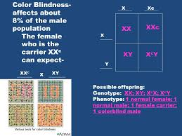 Can A Female Be Color Blind Mendel U0026 Heredity Genes Are Segments On The Chromosomes That