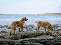 salt water new england preppy dog names and breeds