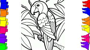 draw step step bird coloring pages kids parrot