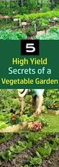 love growing your own vegetables these 5 high yield vegetable