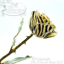 Gold Rose The New Zebra Gold Rose By The Forever Rose