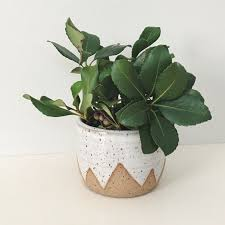 Planter Pot White Mountain Planter Small Speckled Planter White Ceramic
