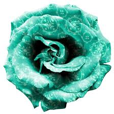 turquoise roses turquoise png by mysticemma on deviantart