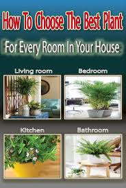 Best Plant For Bathroom by How To Choose The Best Plant For Every Room In Your House