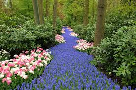 keukenhof flower gardens all you need to know about keukenhof tulip gardens amsterdo