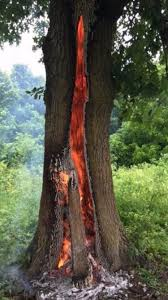 this oak tree burning from the inside out from being struck by