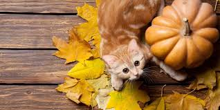 4 ways to say happy thanksgiving to your cat world s best