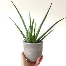 five easy house plants sarah kirby