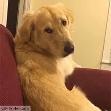 Frowning Dog Meme - turn that frown upside down album on imgur
