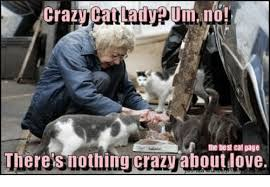 Crazy Cat Lady Memes - crazy cat lady pum no the best eat page theres nothing crazy