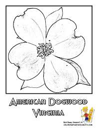 flower coloring pages states penn wyoming usa islands free