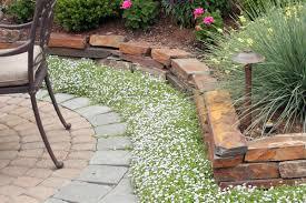 low maintenance lawn alternatives ground cover har com