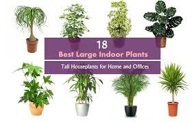 good inside plants best indoor plants balcony garden web good indoor plants deaft