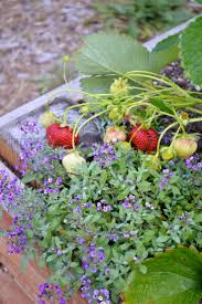 108 best potager gardens beyond the vegetable patch images on