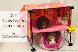 cali cavy collective a blog about all things guinea pig how to