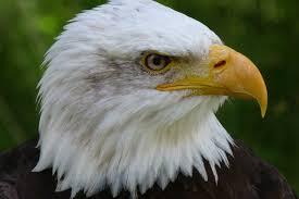 free stock photos of bird of prey pexels