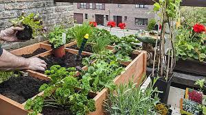 gem se pflanzen balkon kräuter gemüse balkon 15 51 12 egenis inspirierend garten