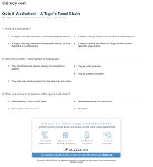 quiz u0026 worksheet a tiger u0027s food chain study com