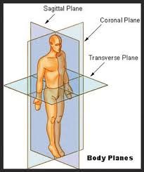 Human Anatomy Planes Of The Body Planes Of The Body Archives Sterling Yoga Mobile