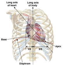 Human Anatomy Anterior Anatomy Tutorial Anterior Atlas Of Human Cardiac Anatomy