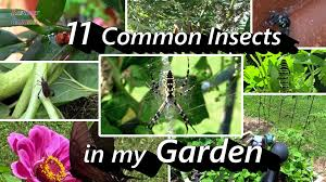 2 minute insect id 11 common insects in my vegetable u0026 herb