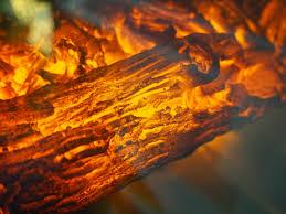 free images nature sunlight leaf smoke log reflection