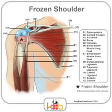 Tendons In The Shoulder Diagram Diagram Of Shoulder Muscles And Tendons Human Anatomy Body
