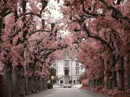 houses perfect entrance driveway pink house trees 1080p wallpaper