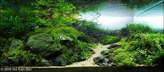 japanese aquascape looking for a theme borneo or japanese aquascape the planted